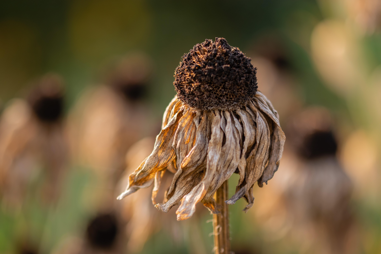 Dead flower