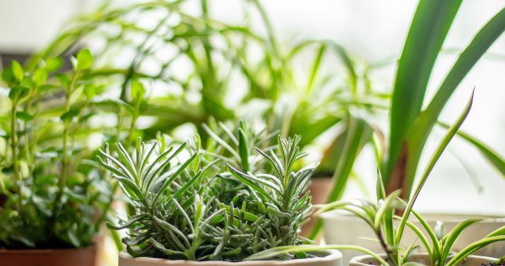 Israel Herb Garden Image