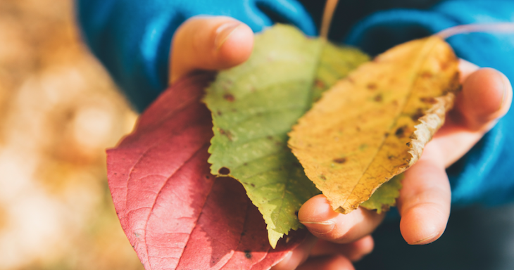 School's Out - Lessons From A Forest Kindergarten Image