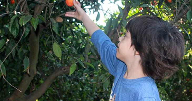 Boy picking fruit from tree