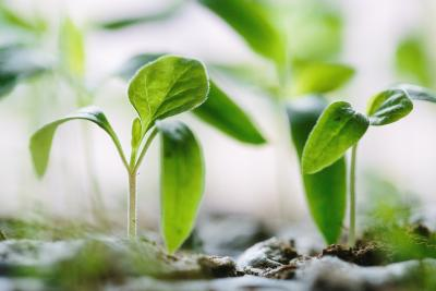Thriving and new paradigms as new growth from the earth
