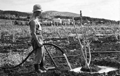 Man Watering Plants on Kibbutz